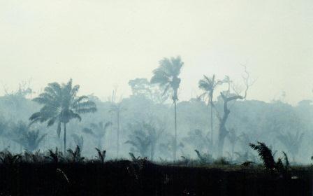 Brennender Regenwald südlich von Boavista /Roraima/Brasilien) - Foto © Gerhard Hofmann (1991)