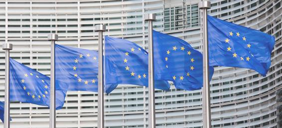 EU-Flaggenwald Foto © EU