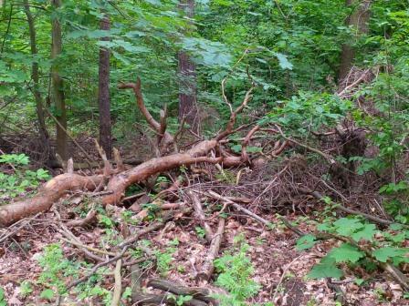 Biomasse Holz - Foto © Gerhard Hofmann Agentur Zukunft