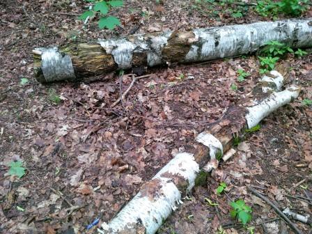 Biomasse Holz 1 - Foto © Gerhard Hofmann Agentur Zukunft