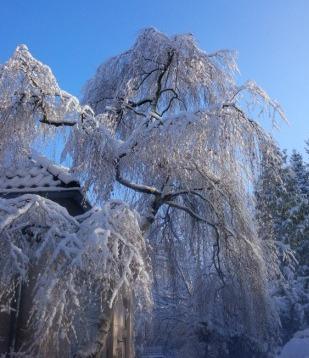 Winter in Berlin - Foto © Gerhard Hofmann, Agentur Zukunft für Solarify 20150131_102652