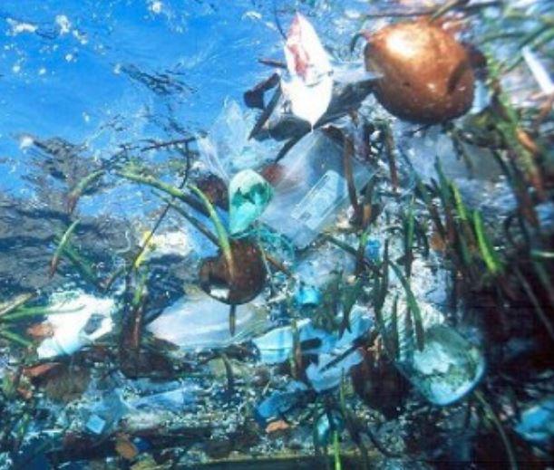 Plastiktüten im Meer - Foto © Wikimedia Commons
