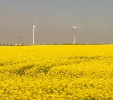 Bio (Raps) und Wind bei Weißenfels - Foto © Gerhard Hofmann, Agentur Zukunft für Solarify