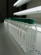 Kulturflaschen im Labor - Foto © Kai Lohbeck, GEOMAR Helmholtz Zentrum für Ozeanforschung Kiel