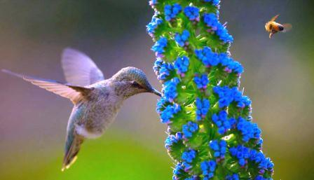 Kolibri - Foto © tyerwind.com