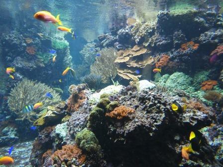 Gefährdetes Paradies, Korallenriff - Foto © Agentur Zukunft für Solarify