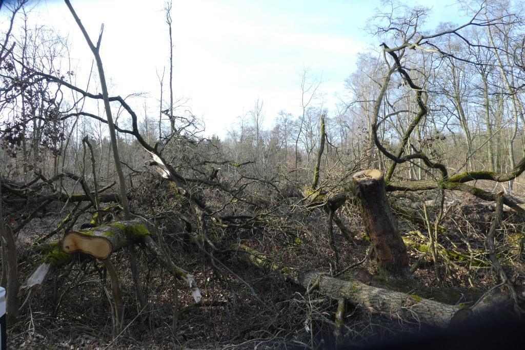 Durch Orkan zertsörter Wald bei Rathenow - Foto © Agentur Zukunft für Solarify