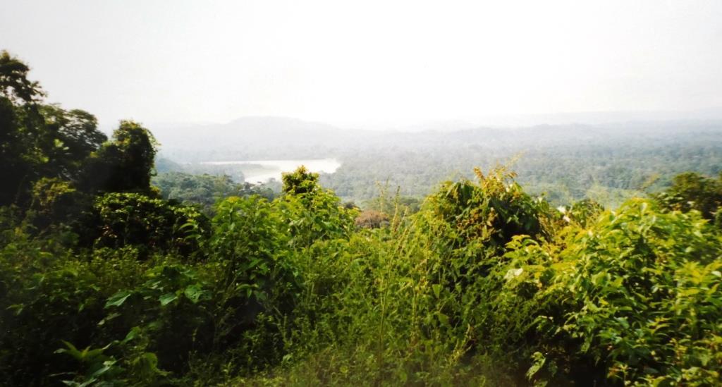 Regenwald, Rio Napo, Ecuador - Foto © Gerhard Hofmann, Agentur Zukunft für Solarify