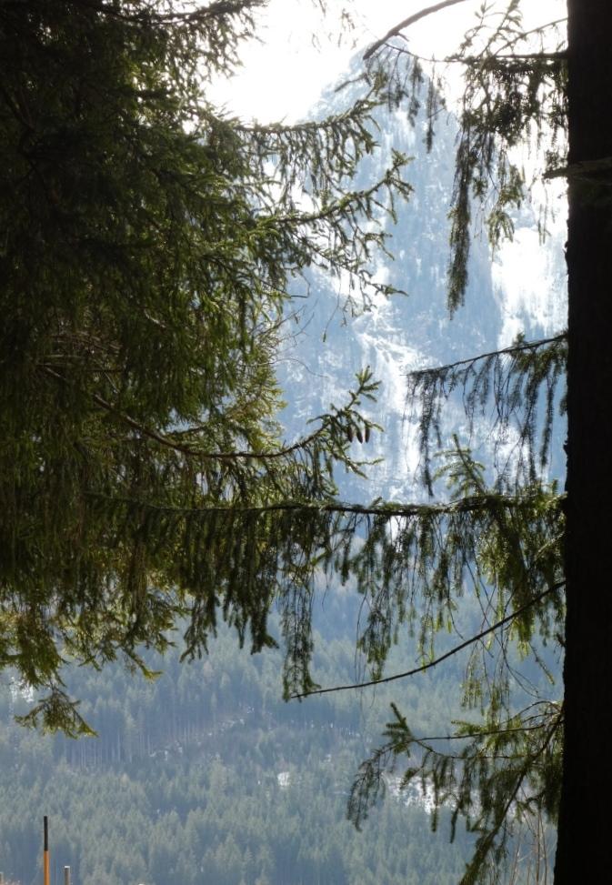 Waldsterben oberhalb von Ramsau, Obb. - Foto © Gerhard Hofmann, Agentur Zukunft für Solarify