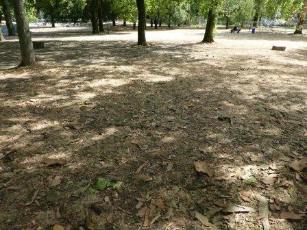 Dürre im Stadtpark Duisburg - Foto © Gerhard Hofmann für Solarify